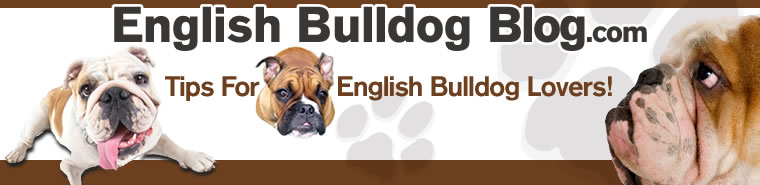 English Bulldog Blog Header