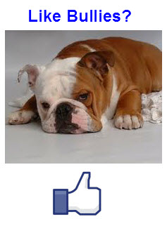 English Bulldog Lovers Fan Page